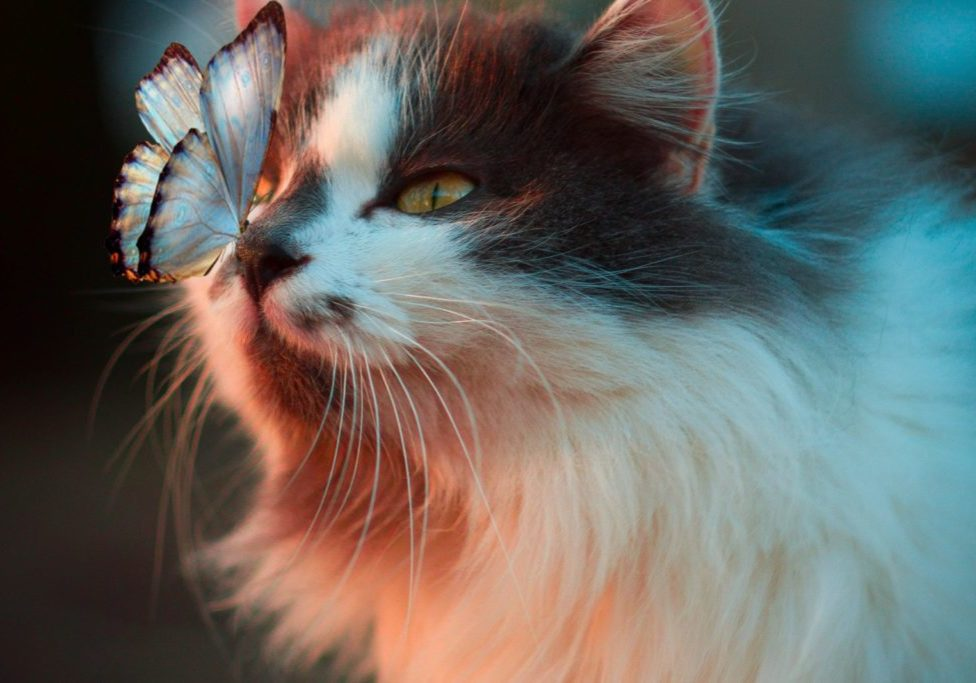 cat with butterfly landing on its nose