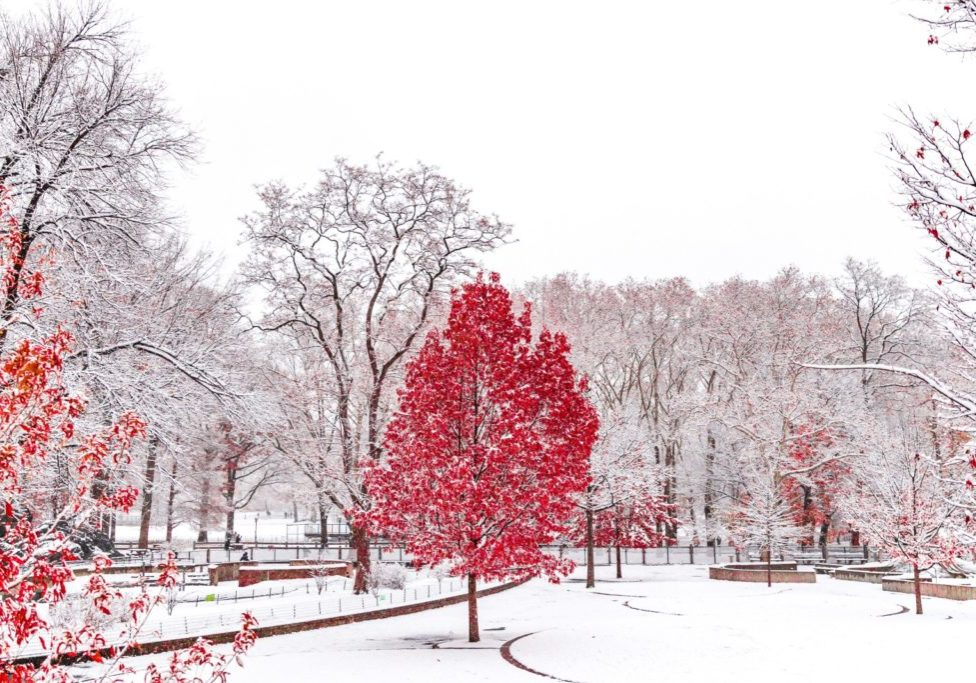 red trees against snow covered park