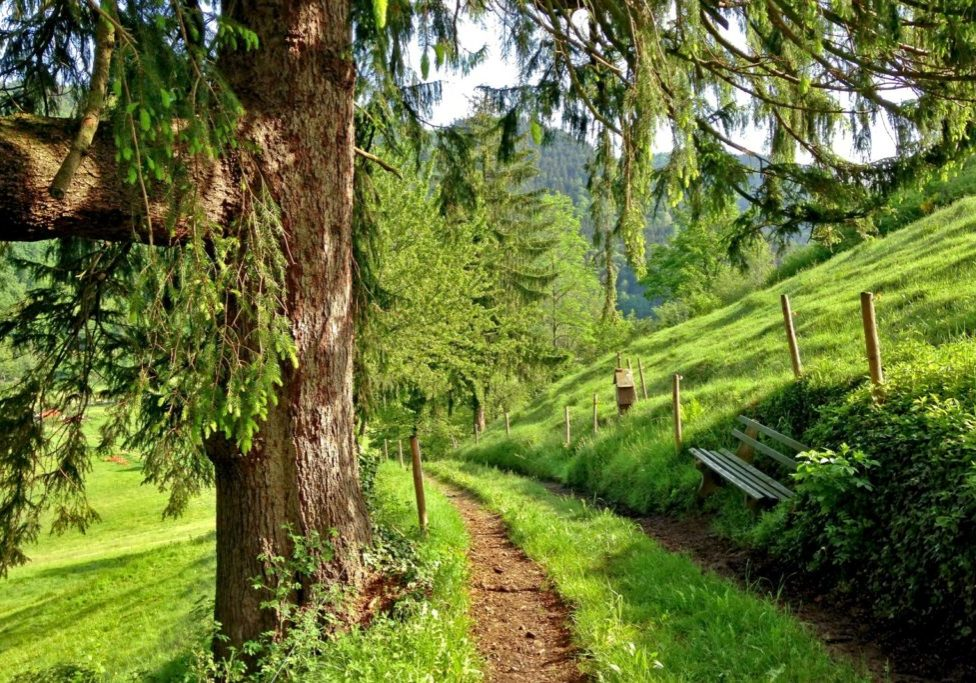 lush green path through a wooded and grassy lane